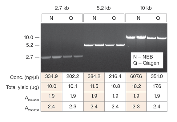 Monarch Plasmid Miniprep Kits consistently produce more concentrated plasmid DNA with equivalent yield, purity and functionality as compared to the leading supplier. Preps were performed according to recommended protocols using 1.5 ml aliquots of the same overnight culture. One microliter of each prep was digested with HindIII-HF (NEB #R3104) to linearize the vector and the digests were resolved on a 1% w/v agarose gel.