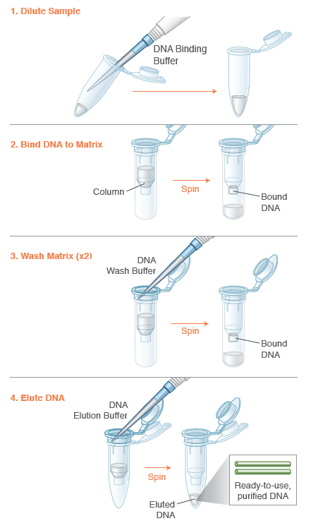 Monarch PCR & DNA Cleanup Kit (5 µg) Protocol