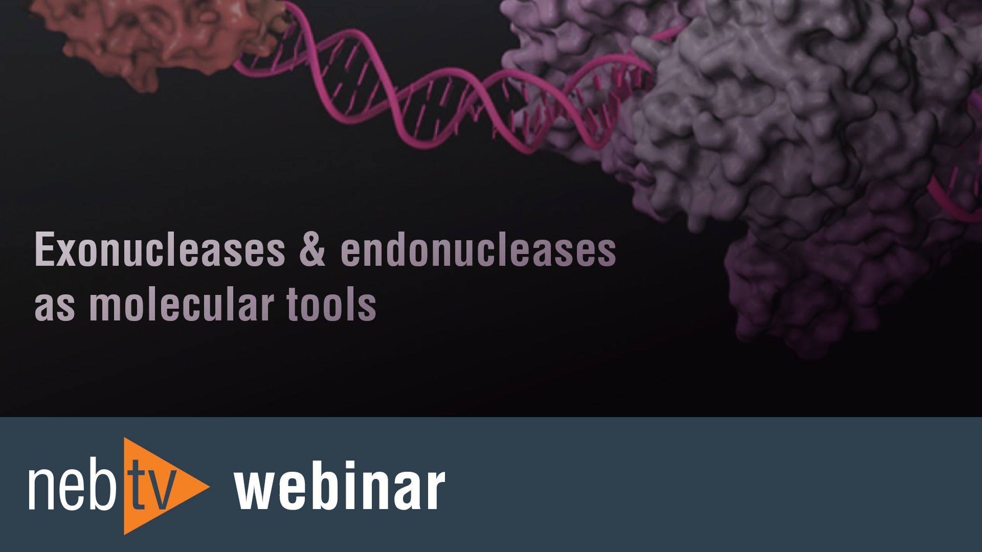 NEBTV_Webinar_Exonucleases_endonucleases-as-molecular-tools_1920