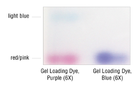 Quick-Load Purple DNA Ladders   New England Biolabs